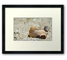 Large Shell Framed Print