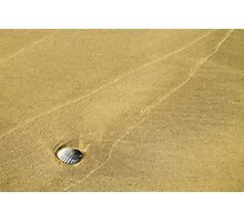 Small shell on beach Photographic Print
