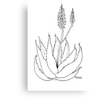 Aloe love (plant of immortality) Canvas Print