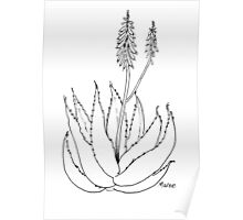 Aloe love (plant of immortality) Poster