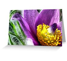 Flower Power -  Greeting Card