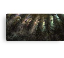 Ammonite shell Canvas Print