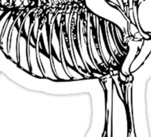 Horse Skeletal Anatomy (Skeleton) Sticker