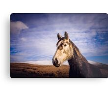 An Irish Horse Metal Print