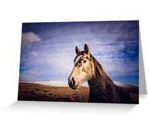 An Irish Horse Greeting Card