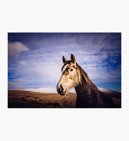 An Irish Horse Photographic Print