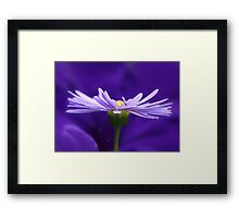 Daisy & Petunia - Two Toned Purple Framed Print