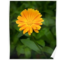 Yellow flower and green leaves Poster
