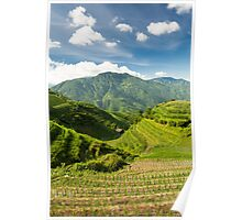 Landscape of rice terraces in china Poster