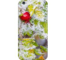 Rose hip and frozen leaves iPhone Case/Skin