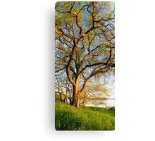Vertical panorama of big tree  Canvas Print