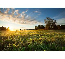 Tranquil grassland and trees at sunrise Photographic Print