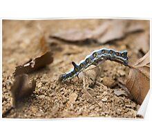 Cute caterpillar macro Poster