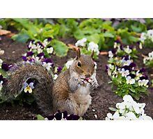 Cute flowerbed squirrel Photographic Print