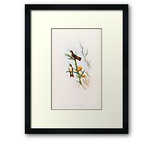 A monograph of the Trochilidæ or family of humming birds by John Gould 1861 V5 092 Framed Print