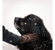 Woman gratify big newfoundland dog, snowy weather Photographic Print