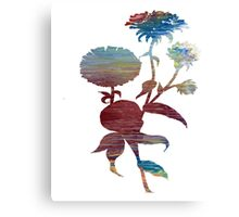 Aster Canvas Print