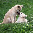 Puppy Love by Jo Nijenhuis