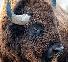In the Presence of Bison by Lena Owens  by ArtOLena
