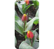 Cheeky Tulips - Keukenhof Gardens iPhone Case/Skin