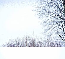 One Tree behind a Snow Wall by Imi Koetz