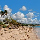 Tropical Breezes by Lanis Rossi