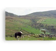 Among the mountains of Llanfairfechan. Canvas Print