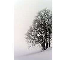 Beautiful winter snowy landscape with fog, alsacien mountains Photographic Print