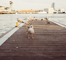 Seagulls On A Jetty by PatiDesigns