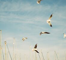 Flying Seagulls by PatiDesigns