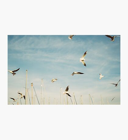 Flying Seagulls Photographic Print