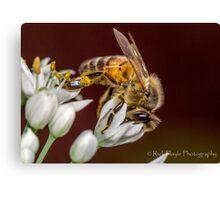 Beewonder Canvas Print
