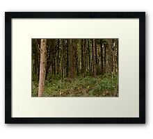 Woodland in Wales Framed Print