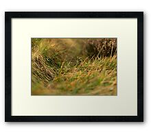 Parting Grass Framed Print