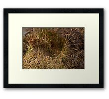 Macro Tree Framed Print