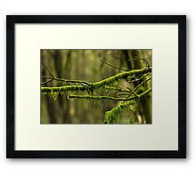 Moss Branches Framed Print