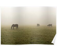 Horse & Cows Poster