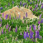 Loopy Lupins by Harry Oldmeadow