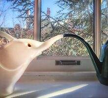 Windowsill Rendezvous by Owed To Nature
