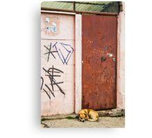 The Dog's Door Canvas Print