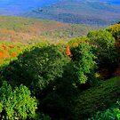 Saddle Canyon N W Arkansas by NatureGreeting Cards ©ccwri