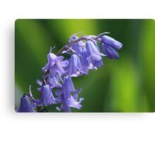 Violet-Blue English Bluebells Canvas Print