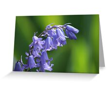 Violet-Blue English Bluebells Greeting Card
