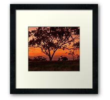 Australiana Framed Print