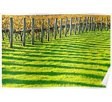vineyard bars Poster