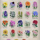 The Floral Alphabet by Stephanie Smith