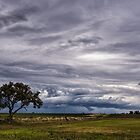 A Lone Tree Against the Storm by Kristin Repsher