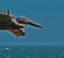 Pelican in flight Sticker