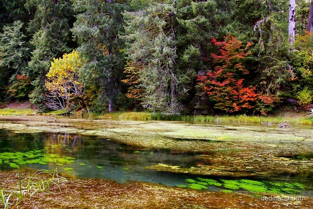 autumn spring by dedmanshootn