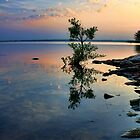 Reflections Of Morning by Carolyn  Fletcher